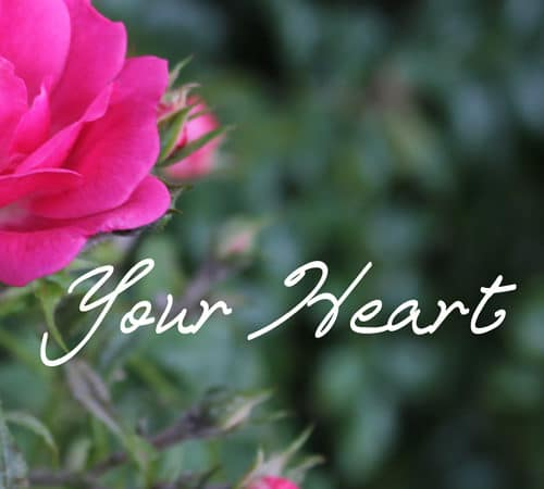 Sink Verses: The Heart