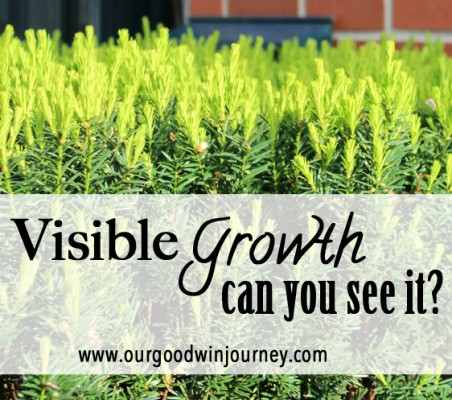 Spiritual Growth - Can you see the growth in your life?