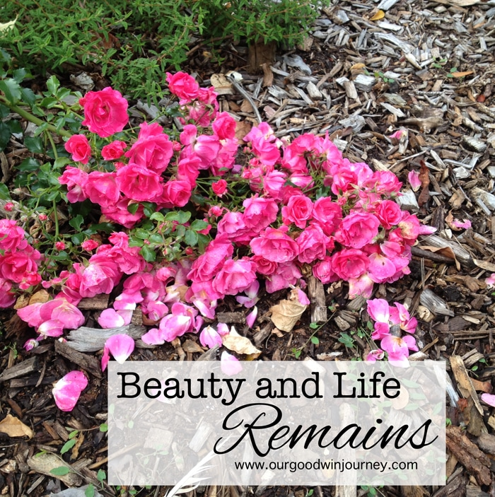 when seasons of life change, when fall comes... beauty and life remains strong #faith #strength