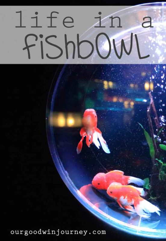 Life in a Fishbowl - Learning to Live Transparent and Open