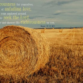 Seek the Lord – Your Unplowed Ground