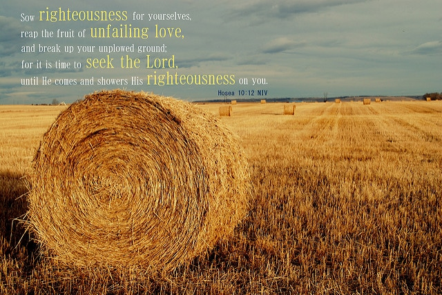 Seek the Lord - Starting to Break Up Your Unplowed Ground