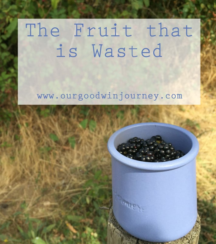 The Fruit that is Wasted - a lesson of missions, of faith and living out the Great Commission