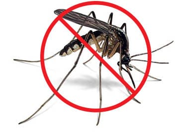 Mosquito Battles